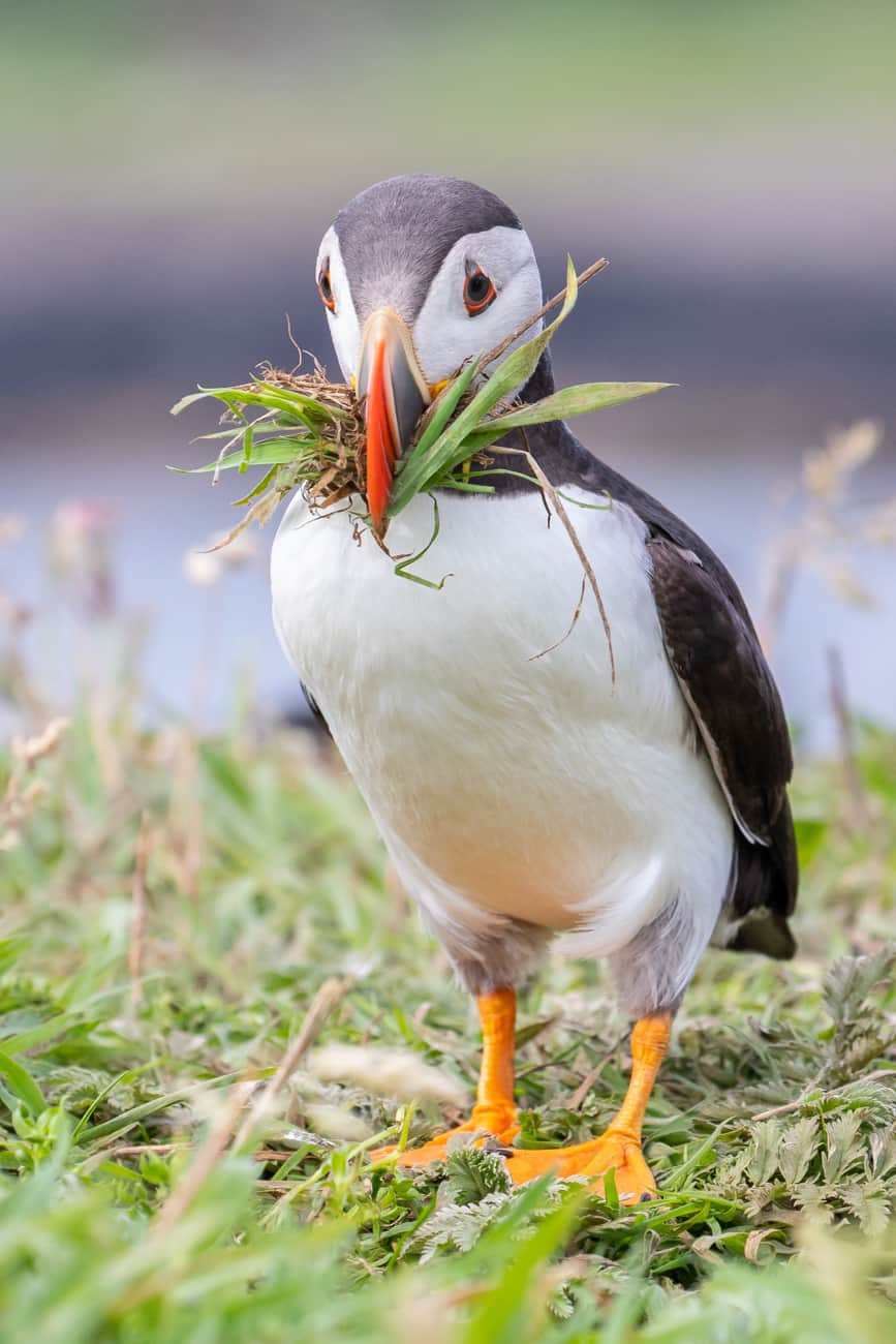 Farne Islands Photography Tour by Julie Claydon