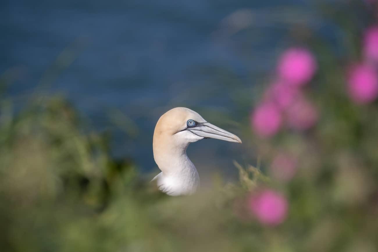 Julie Claydon Bird Photographer and Bird Photography Tours