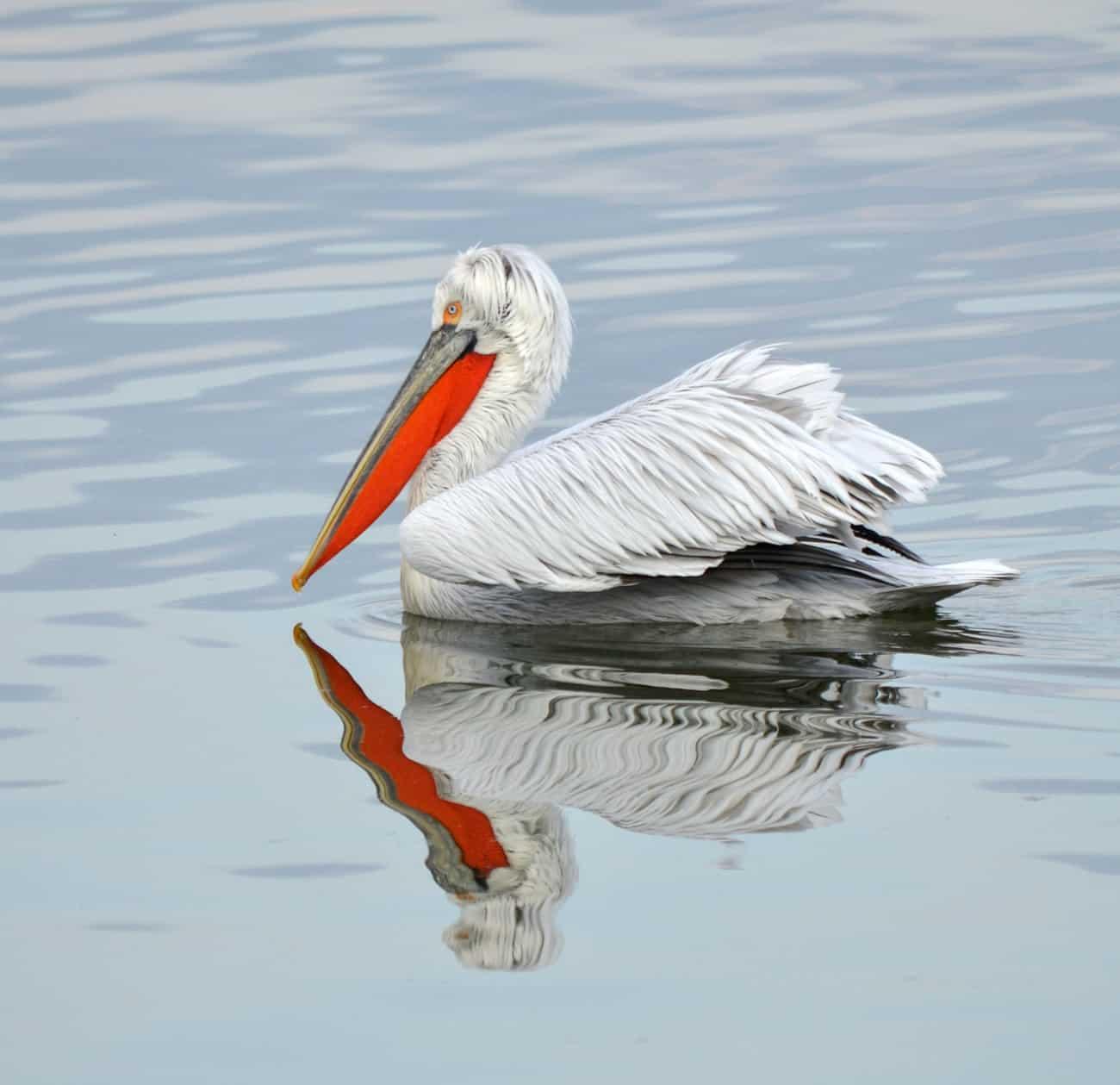 Lake Kerkini Photography Tour by Julie Claydon